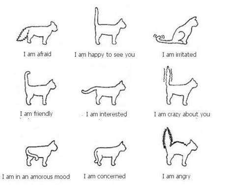 Tootle Doodles Understanding Cat Body Language Cat