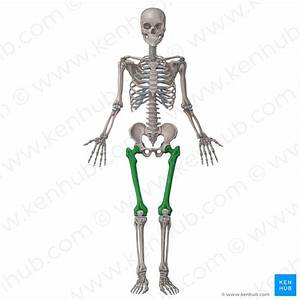 Musculoskeletal System  Anatomy And Diagram