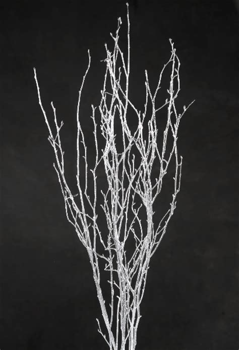 silver birch branches   ft  branches