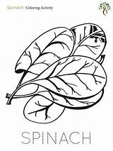 Spinach Template Coloring Activity sketch template