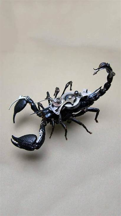 Scorpio Scorpion Wallpapers Decal Tattoo