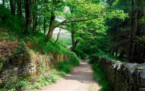 lovely forest path earth wall wallpapers lovely forest