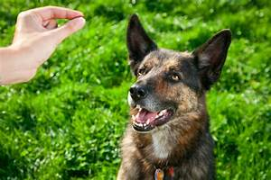 4 tips to properly discipline your dog With dog discipline classes