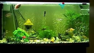 Liter Berechnen Aquarium : blood worms frenzy 20 fish in 250 litre aquarium devour blood worms in 1 minute youtube ~ Themetempest.com Abrechnung