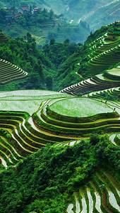 Wallpaper, Guangxi, Longsheng, Rice, Terraces, Beautiful