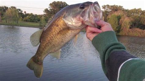 florida fishing pond