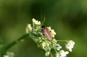 Insekten Im Haus : ungebetene insekten im haus bernsteinschaben beunruhigen ~ Lizthompson.info Haus und Dekorationen