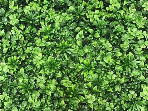 Mur Végétal Et Murs Végétaux Artificiels