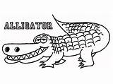 Alligator Coloring Crocodile Outline Pages Printable Drawing Cute Alligators Cartoon Realistic Drawings Template American Getdrawings Animal Line Insider Sketch Getcoloringpages sketch template