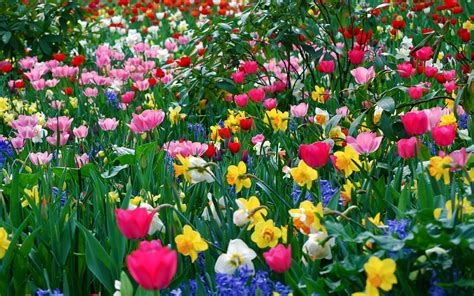 image of all flowers anticipating may flowers
