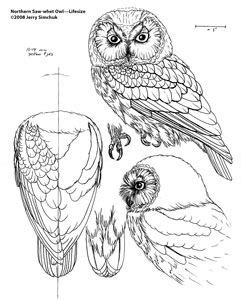 patterns  wood carving owls wood carving patterns