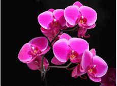 51 imagini deosebite cu flori de ORHIDEE poze imagini