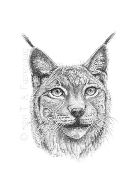 lynx  portrait  atcraftsy art color pencils
