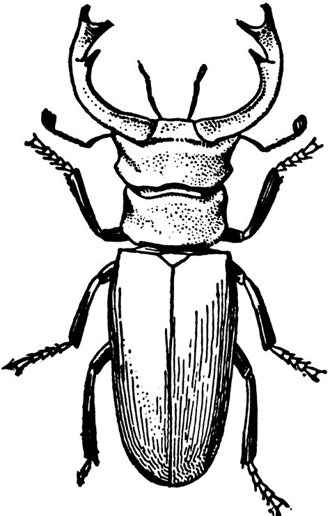 Stag Beetle | ClipArt ETC