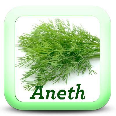 sauge en cuisine les herbes aromatiques dans la cuisine je cuisine mon