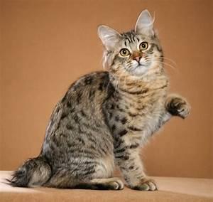 Cool Cat Breeds - Cat Breeds Encyclopedia