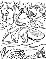 Anteater Coloring Animals sketch template