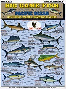 amazoncom tightlines chart  big game fish id chart