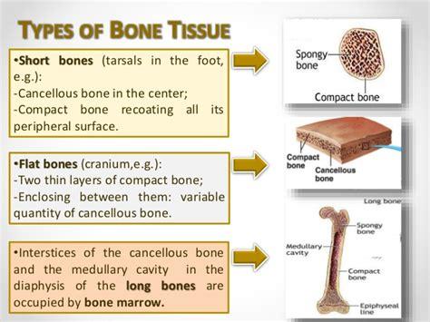 Human Bone Tissue