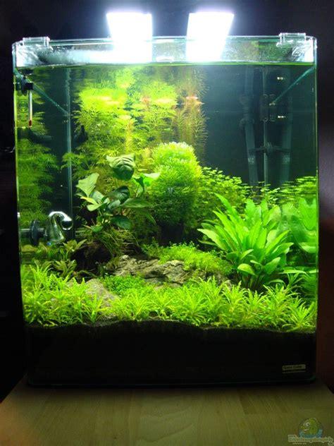 fische für 60 liter aquarium aquarium christoph luz nano cube 60 liter