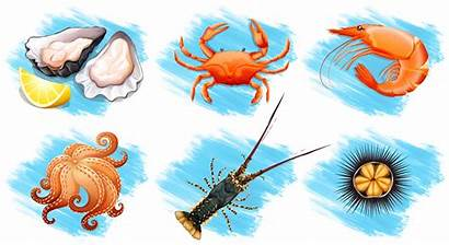 Seafood Type Different Vector Graphics Kinds Vectors