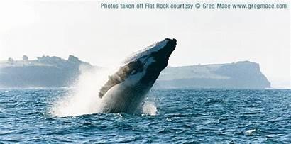 Whale Watching Ballina Australia Nsw Whales Bay