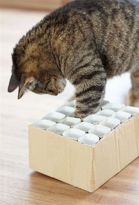 katzenspielzeug basteln ideen katzenspielzeug fummelkiste diy cat content katzen spielzeug katzen und katzenspielzeug