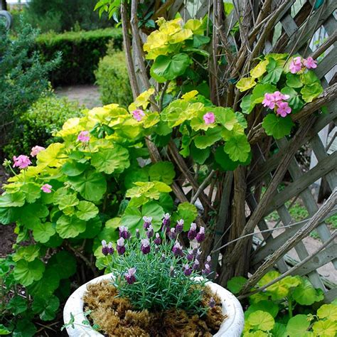 shady area plants southern california gardening plants for dry shady areas