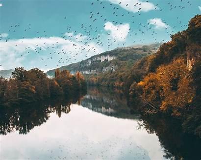 Lake Birds Trees Reflection Flight Autumn Standard