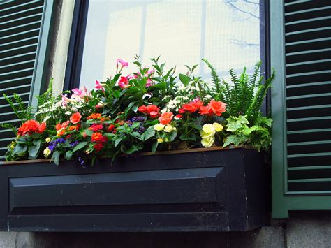 pretty window box ideas