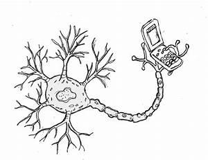 Motor Neuron Drawing