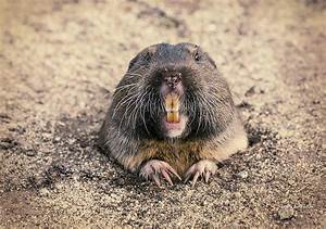 Got Gophers? | THE PEOPLE'S PATH