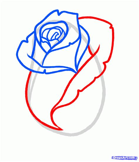 draw  rose bud rose bud step  step flowers