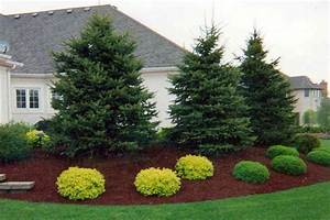 beautiful landscaping with evergreens small evergreen With beautiful idee amenagement jardin paysager 7 accueil