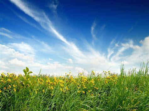 Green Blue Clouds Nature Flowers Grass Fields Meadow