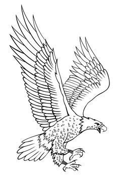 Image result for eagle drawings (com imagens) | Desenhos