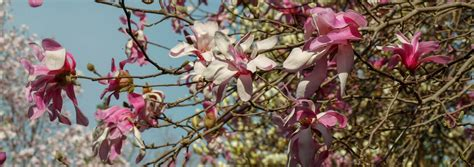 JC Raulston Arboretum Calendar February 2019