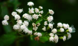 Plants with White Flowers