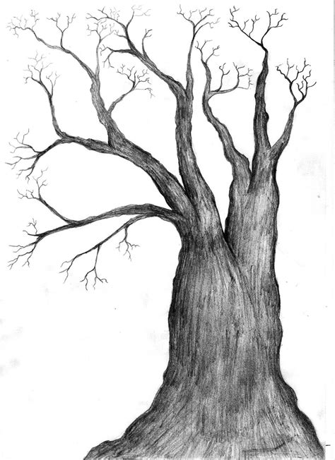Free Black And White Tree Drawing Download Free Clip Art