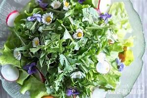 Was Sind Frühlingsblumen : diese 7 fr hlingsblumen und wildkr uter haben wir zum fressen gern ~ Whattoseeinmadrid.com Haus und Dekorationen