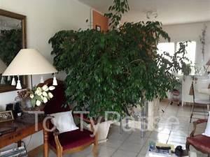 Arbre D Intérieur : petite arbre languedoc roussillon ~ Preciouscoupons.com Idées de Décoration