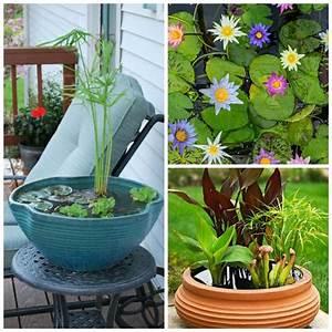 faire un bassin aquatique pour decorer son jardin ou sa With tapis chambre bébé avec pot de fleur exterieure