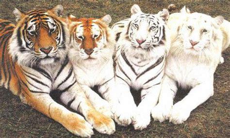 Inspiration Albino Animals Part