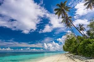 Beach, Shrubs, Palm, Trees, Island, Paradise, Clouds, Tropical, Beautiful, White, Sand, Summer
