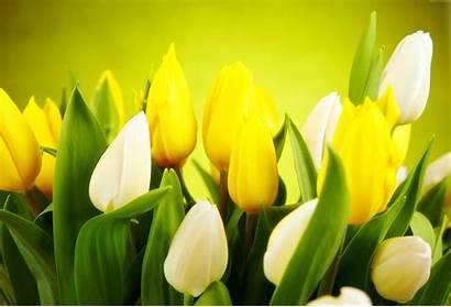 4k Yellow Flowers Desktop Wallpapers