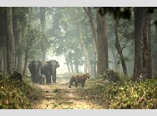 The Dudhwa National Park And Tiger Reserve TravelTriangle