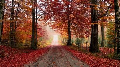 Autumn Road Trees Foliage Fallen Background Widescreen