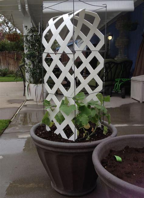 leftover lattice cucumber trellis planter trellis