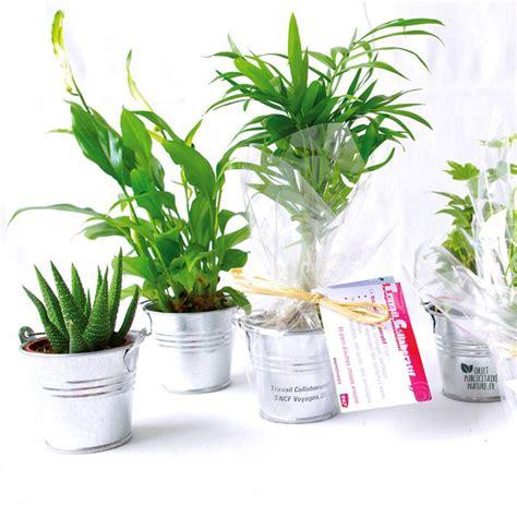 plantes de bureau offrir plante dépolluante de bureau en pot zinc objet