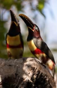 Exotic Toucan Bird Colors